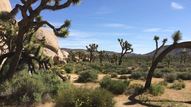 More than 2.8 million people visited Joshua Tree National Park in 2017 -- 338,000 more than in 2016 and the fourth consecutive record attendance year for the park, officials said.