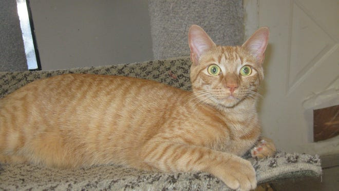 Everyone says what a great cat I am – intelligent, good-natured and fun-loving, and I get along well with other cats.