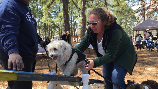 Nina Paulaitis, leader of Cumberland County 4-H Paw Shakers, helps Buddy, a 4-year-old Bichon Frise take on a see-saw, as Buddy's co-owner, Michael Lee of Vineland, watches during last year's Paws for Art event at Wheaton Arts and Cultural Center in Millville.