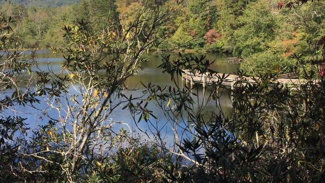 Lake Powhatan has a designated swimming area in Bent Creek Experimental Forest, 10 minutes from Asheville.
