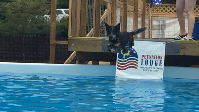 A new dock diving pool for dogs in Loveland, Ohio,  is proving popular with local canines.