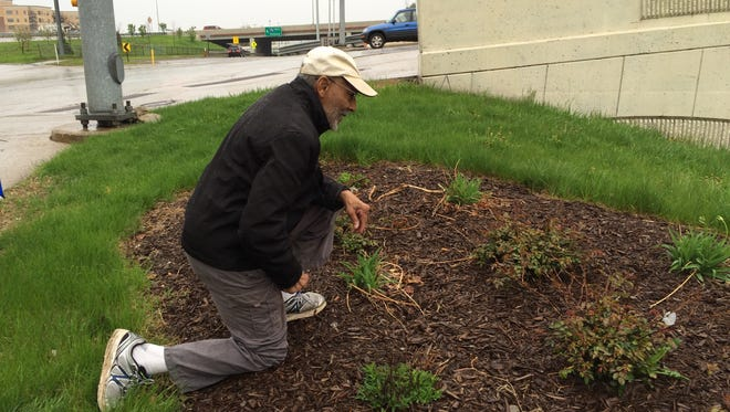 In this photo taken Tuesday, May 5, 2015, a Rev. Van Covington shows the site where he planted three crosses in downtown Grand Rapids, Mich. The city removed the 40-year-old display at the request of the American Civil Liberties Union.