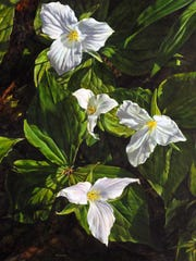 """""""Trillium Quartet,"""" oil on board by Julie Briede Ibar, part of the """"Nature's Glory"""" exhibit opening the season at Edgewood Orchard Galleries."""