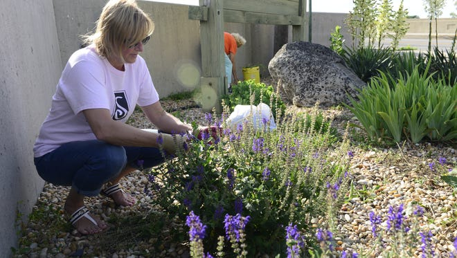 Denise Burns of Fremont waters flowers by the State Street Bridge on Wednesday. The Soroptimist International Club of Fremont maintains a flower garden on the east side of the bridge.