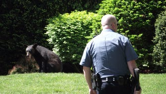 Police were on scene of a bear that traveled from Midland Park to Ridgewood and then Waldwick
