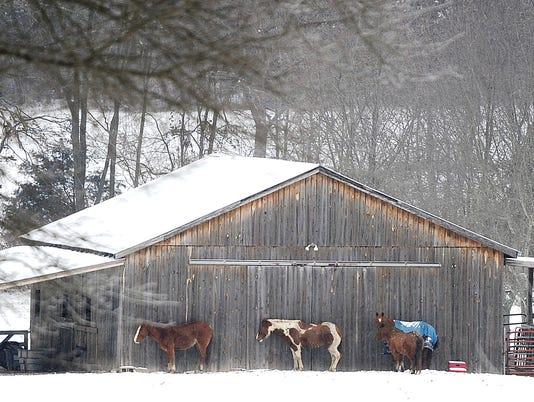 635611694940877134-snowhorse