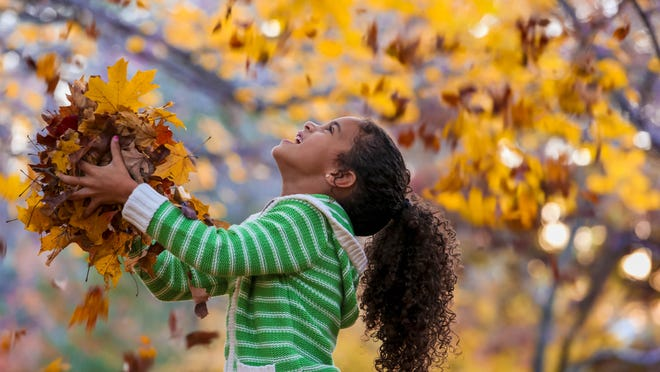 There are several options for using fall leaves, including compost, lawn fertilizer and mulch.