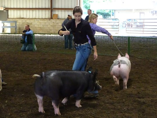 Elizabeth Porteus and Lindsay Lupher show pigs during the Showman of Showmen event Wednesday at the Coshocton County Fair. The winners of the showmanship classes at the junior fair competed for best overall by showing 10 species.