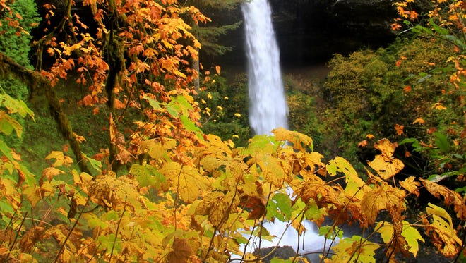 Silver Falls State Park is a go-to weekend excursion for many people in the Willamette Valley. It is beautiful year-round, including the classic fall colors in the trees and the winter ice overtaking the falls.