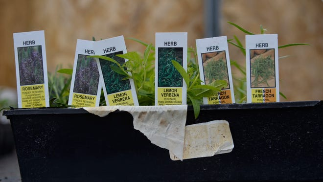 Toad Hall Farm in Emmett shows it's best to label your seedlings and young plants in their seed trays.