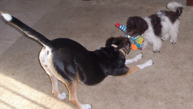 Dogs having fun!