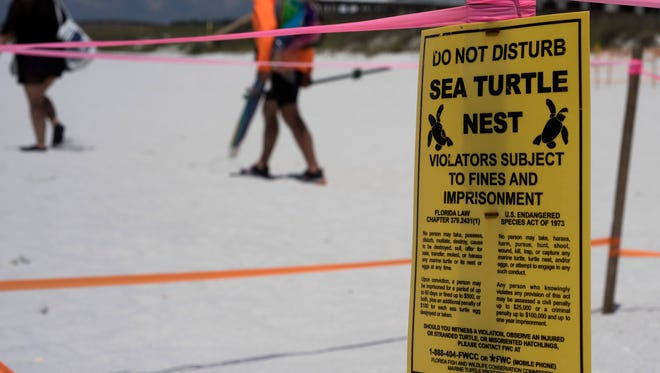 Experts say aleatherback sea turtle nest has been discovered in Navarre for the first time ever.
