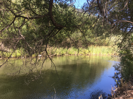 There are not many spots along the Ventura River Trail