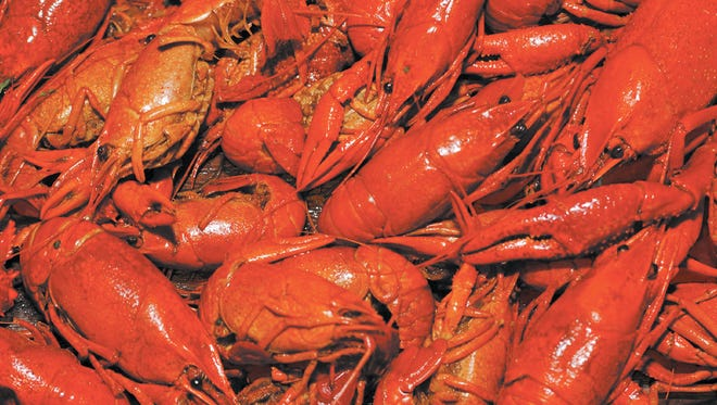 Crawfish sellers credit a relatively warm winter for larger crawfish early in the season.