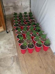 Police seized 179 marijuana plants from a home on Bull Run Road in northwest Davidson County.