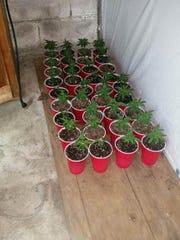 Police seized 179 marijuana plants from a home on Bull