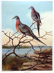 This poster of extinct passenger pigeons was created