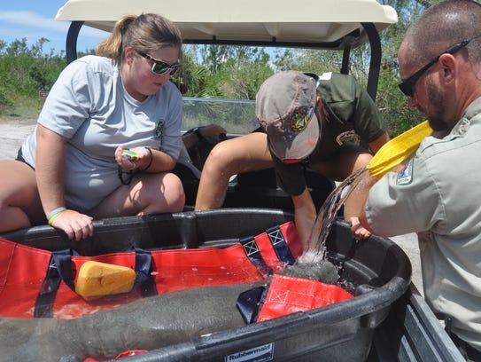 FWC marine mammal biologists Molly Schubert and Hada