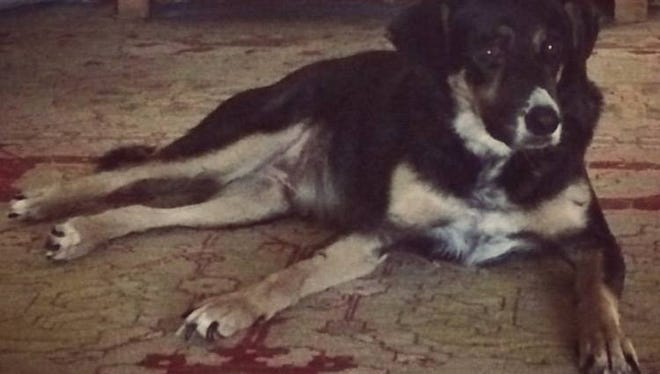 Jan Risher's family dog Hunter died recently at 15 years old.