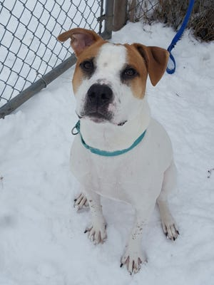 A 1-year-old mixed breed, Cheerio is friendly and trusting and likes other dogs and older kids. He is neutered.