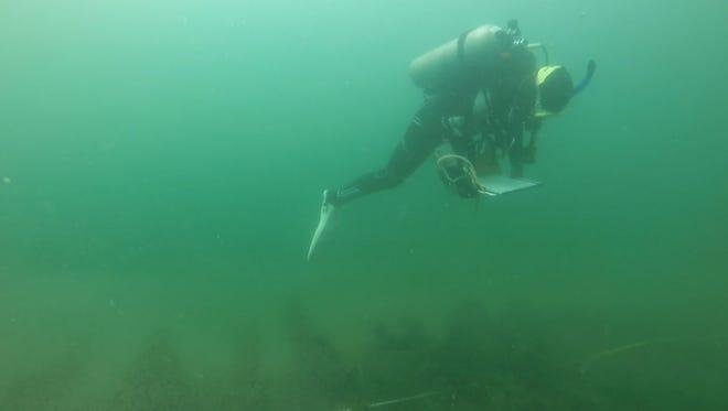 One of the East Caroline Marine Studies graduate students taking measurements of the Fleetwing shipwreck in Garrett Bay.