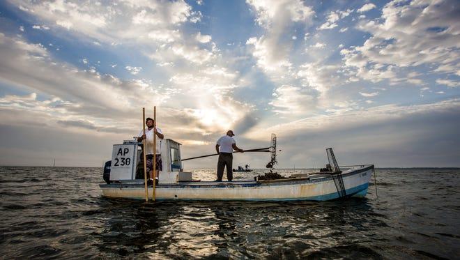 Oystermen work the Apalachicola Bay