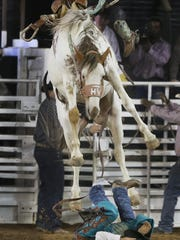 A cowboy covers up as a saddle bronc leaps over him after being bucked off Sunday. The cowboy's boot is at top right of horse.