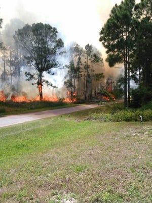 Brushfire off Larkspur Street in Palm Bay.