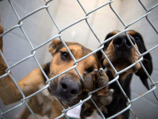 A pair of dogs sit in their kennel Wednesday at the Aztec Animal Shelter.