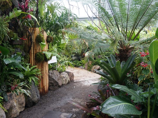 A look at the Rainforest exhibit at the new Conservatory at Lasdon Park.