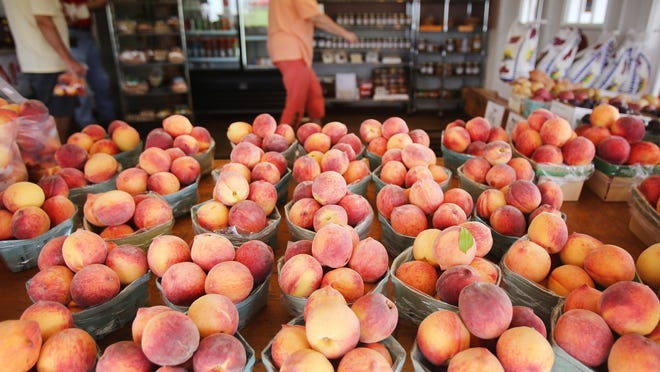 Verellen Orchards in Romeo has peach donuts, peach pies and peach ice cream, along with peaches, although manager David Friedli  says their trees were hit hard by the winter's frigid temperatures. The  peaches they do have to sell are from Grand Rapids.
