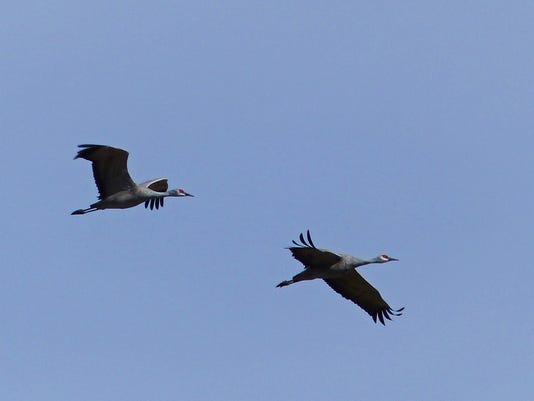 Sandhill-Cranes-by-Jimmy-Zabriskie.JPG