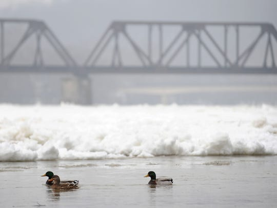 Ducks swim in open water near the Y Bridge lift station as heavy ice clogs the Muskingum River behind them between the Y Bridge and distant Sixth Street bridge.