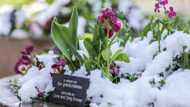 Flowers emerge as snow melts on the grounds of Indianapolis Museum of Art at Newfields in Indianapolis on Monday, April 2, 2018.