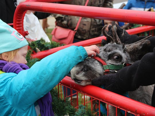 A girl pets Jingle, a 7-month-old reindeer from Kleerview