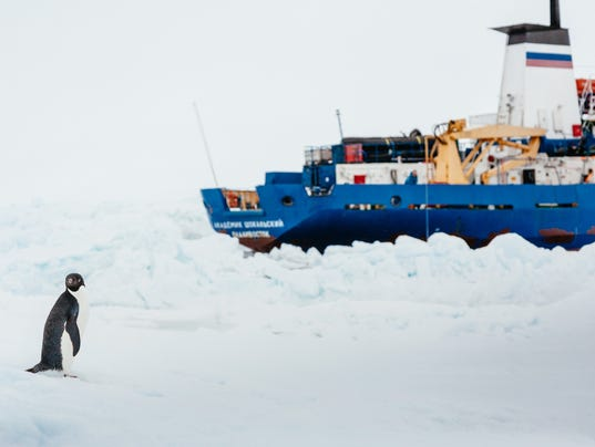 An Adelie penguin is shown near the MV Akademik Shokalskiy  still    Ruse Cruise
