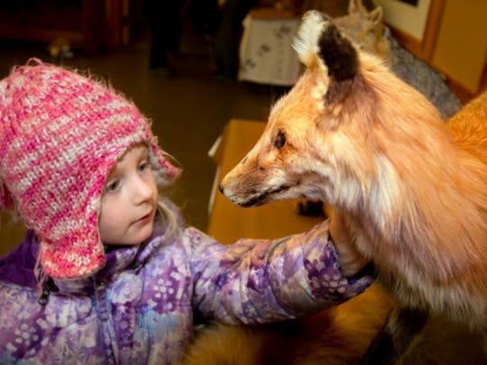 4 year old Evelyn Griffith feels the soft fur of a taxidermy Red Fox at the Schiltz Audubon Nature Center.
