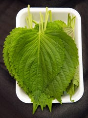 Sesame leaves, also known as Shiso or Perilla, are displayed in the fresh produce section of the Super H Mart Asian grocery in Fairfax, Va., Monday, July 20, 2015. Classic Korean food items are showing up with more frequency on American menus and grocery shelves.
