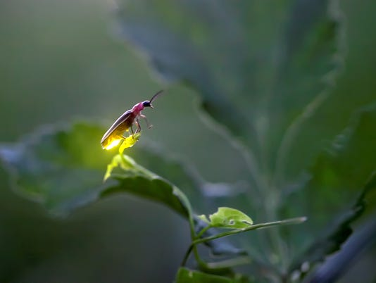 636656282334901500-Radim-Schreiber-Individual-Firefly-Balance.jpg