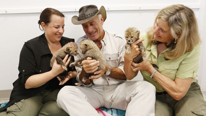 In this May 2018 photo, Jack and Suzi Hanna and their daughter Julie (left) hold a trio of 3-week-old baby cheetahs.