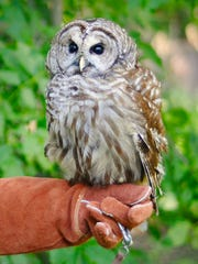 "See ""Owls Up Close"" at Marsh Haven Nature Center on"