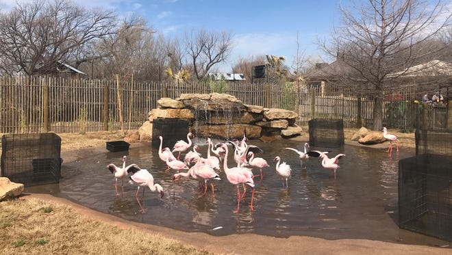 The new Nakuru Lagoon with flamingos and African ducks opened at the Abilene Zoo this month.