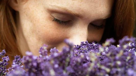 The use of lavender for perfume, medicinal purposes and more dates back thousands of years.