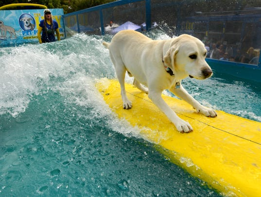 Surfing Dogs 1