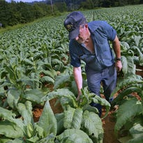 COMMENTARY: New FDA rule impossible for tobacco farmers