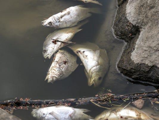 636609623209542003-FON-dead-fish-050218-dcr001.jpg
