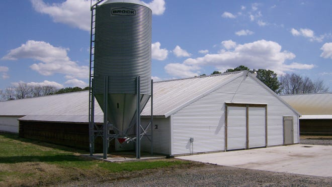 A chickenhouse in Sussex County.