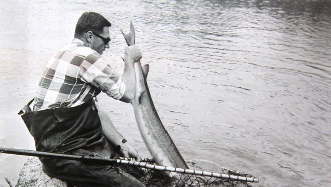 Dan Folz, former DNR fisheries manager in Oshkosh, lands a lake sturgeon on the Wolf River in 1964 as part of research on the species.