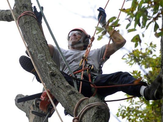 treecare