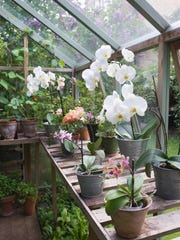 Exotic orchids prosper in the lightand warmth of this attached greenhouse. Workbenches provide ample space for planting and transplanting.